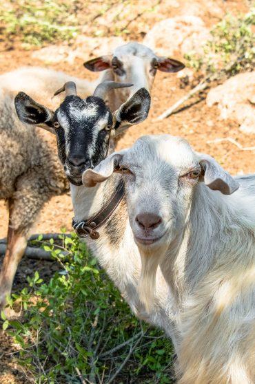 Eumelia Organic Agrotourist Farm & Guesthouse, Ökotourismus, Griechenland